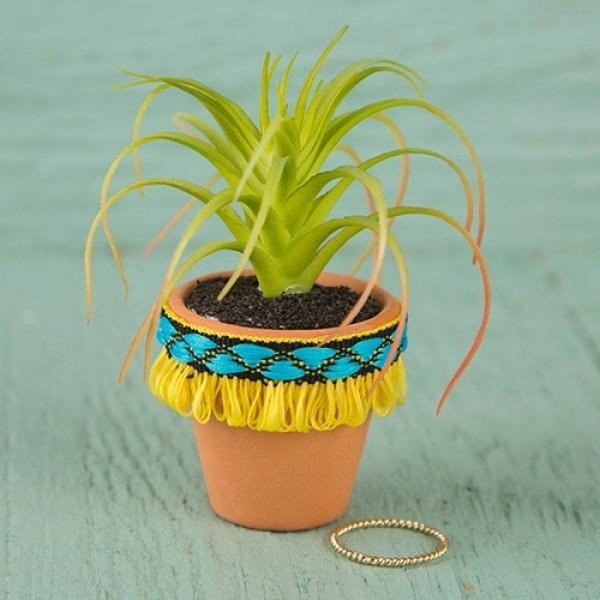 Succulent Yellow Fringe